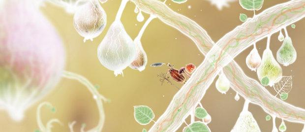 Botanicula News