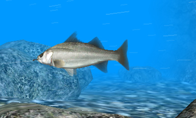 Reel Fishing Paradise 3D Screenshots
