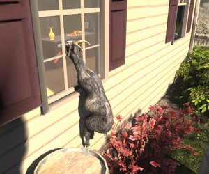 Goat Simulator Screenshots