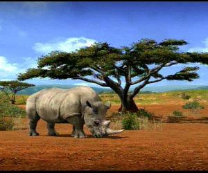 Afrika Files