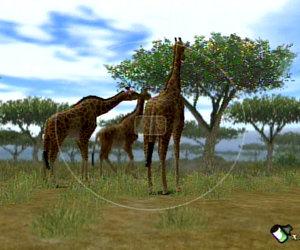 Animal Kingdom: Wildlife Expedition Chat