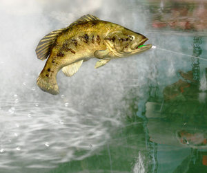 Rapala Pro Bass Fishing Screenshots
