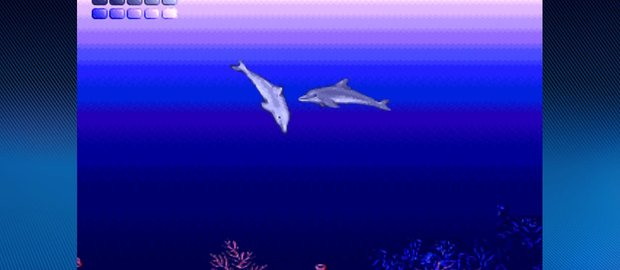 Ecco the Dolphin News