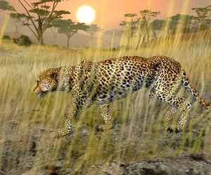 Cabela's African Safari Videos