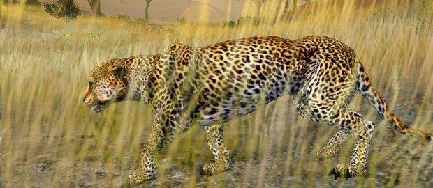 Cabela's African Safari News