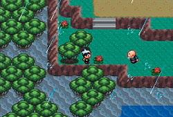 Pokémon Ruby/Sapphire Screenshots